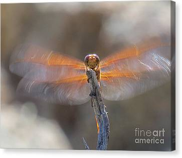 Dragonfly 4 Canvas Print