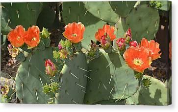 Orange Dream Cactus Canvas Print