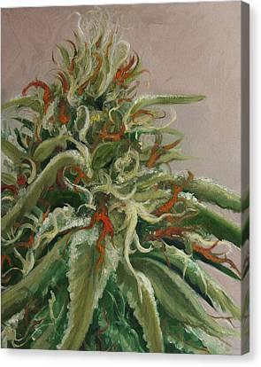 Orange Dreamsicle Canvas Print by Cristin Paige