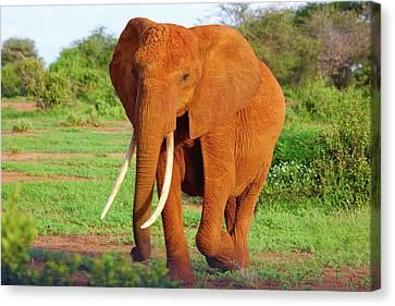 Orange Elephant Canvas Print by Happy Home Artistry