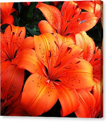 Orange Flower Canvas Print by Carl Griffasi
