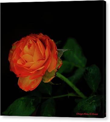 Orange Flower Canvas Print by Chaza Abou El Khair