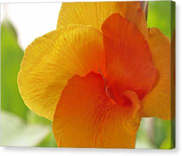 Orange Flower Canvas Print by James Granberry