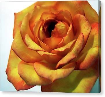 Orange Flower Canvas Print by Maggy Marsh