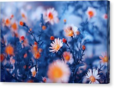 Orange Flower On Blue Canvas Print