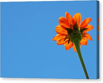 Orange Flower On Blue Sky Canvas Print by Debbie Karnes