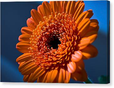 Orange Flower Canvas Print by Svetlana Sewell