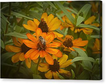 Orange Flowers And Bee Canvas Print