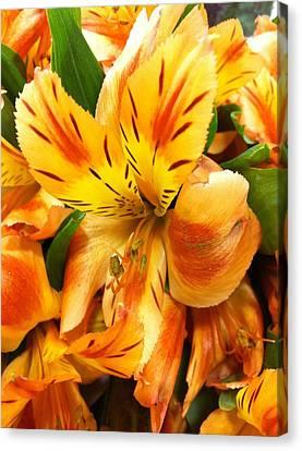Orange Flowers Canvas Print by Carlos Avila