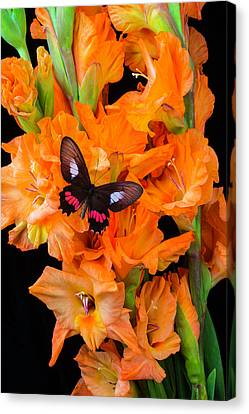 Orange Glad With Butterfly Canvas Print by Garry Gay