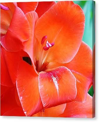 Orange Gladiola Canvas Print