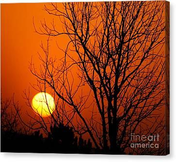 Orange Glow Canvas Print by Lynn Reid