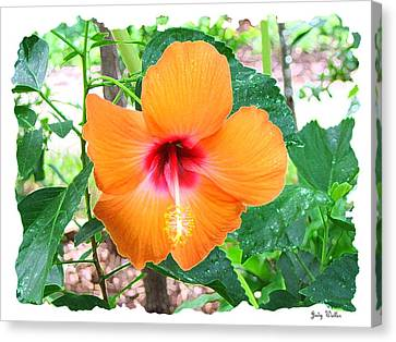 Orange Hibiscus Canvas Print by Judy  Waller