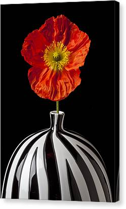 Orange Iceland Poppy Canvas Print by Garry Gay