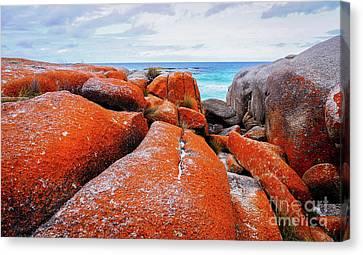 Orange Lichen Landscape Canvas Print