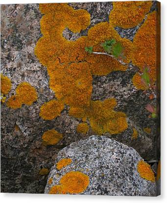 Canvas Print featuring the photograph Orange Lichen On Granite by Mary Bedy