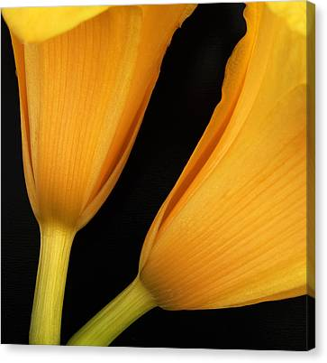 Orange Lily Abstract Canvas Print by Tony Ramos