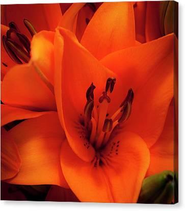 Orange Lily Canvas Print by David Patterson