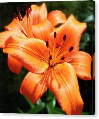 Orange Lily Joy Canvas Print
