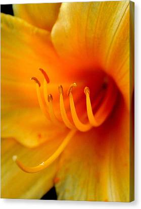 Orange Marmalade 2 Canvas Print