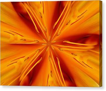 Orange Marmalade Canvas Print by David Dunham