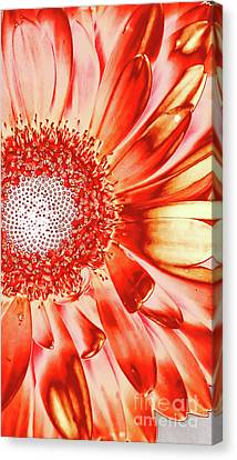 Orange Metal Daisy Canvas Print by Chandra Nyleen