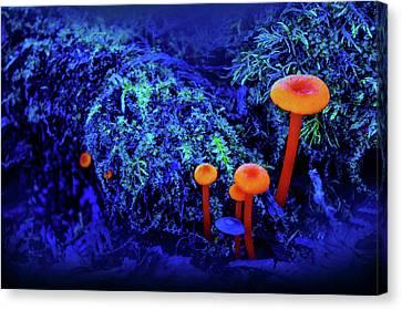Wild Life Canvas Print - Orange Mushrooms by Art Spectrum