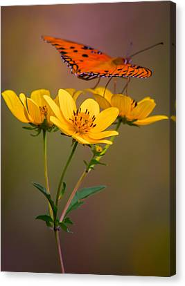 Orange On Yellow Canvas Print by Parker Cunningham
