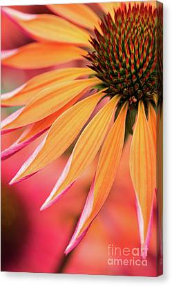 Abstracted Coneflowers Canvas Print - Orange Passion by Tim Gainey