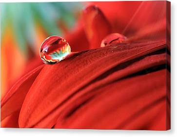 Orange Petals And Water Drops Canvas Print by Angela Murdock