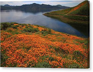 Orange Poppy Fields At Diamond Lake In California Canvas Print by Jetson Nguyen