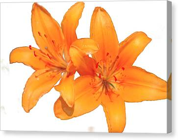 Day Lilly Canvas Print - Orange by Robert OP Parrish
