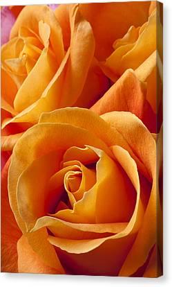 Orange Roses Canvas Print