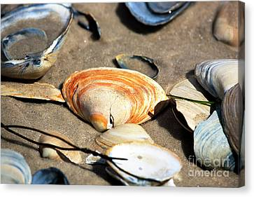 Canvas Print featuring the photograph Orange Seashell by John Rizzuto