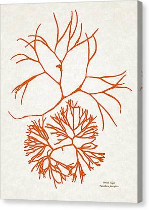 Orange Seaweed Marine Art Furcellaria Fastigiata Canvas Print by Christina Rollo