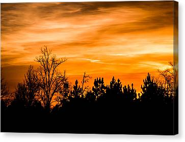 Orange Silhouettes Canvas Print by Shelby Young