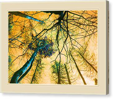 Canvas Print featuring the photograph Orange Sky Tree Tops by Felipe Adan Lerma