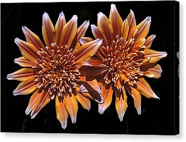 Orange South African Flowers Canvas Print