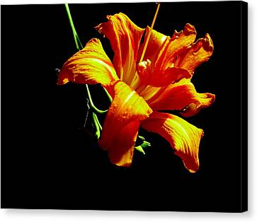 Orange Splendor Canvas Print