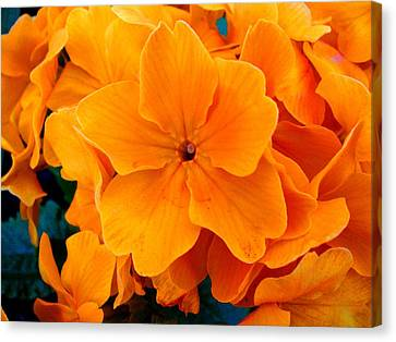 Flowers Canvas Print featuring the photograph Orange Spring by Roberto Alamino