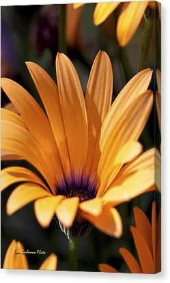 Orange Symphony Canvas Print