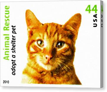 Orange Tabby Cat Canvas Print by Lanjee Chee