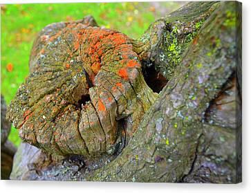 Orange Tree Stump Canvas Print