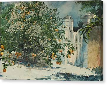 Orange Trees And Gate Canvas Print by Winslow Homer