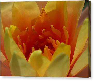 Orange Water Lily  Canvas Print by Juergen Roth