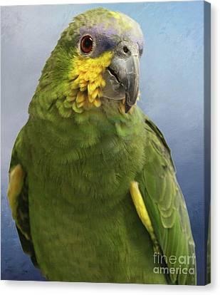 Orange Wing Amazon Parrot Canvas Print