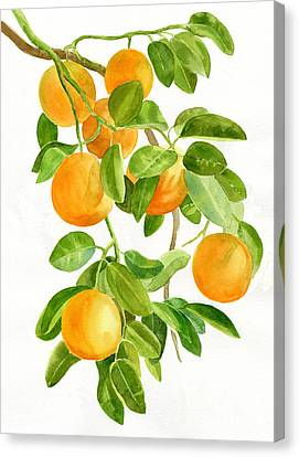 Oranges On A Branch Canvas Print by Sharon Freeman