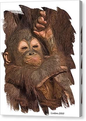 Orangutan Baby Canvas Print by Larry Linton