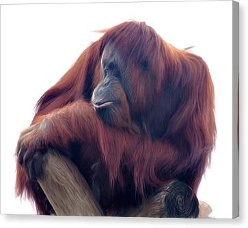 Canvas Print featuring the photograph Orangutan - Color Version by Lana Trussell