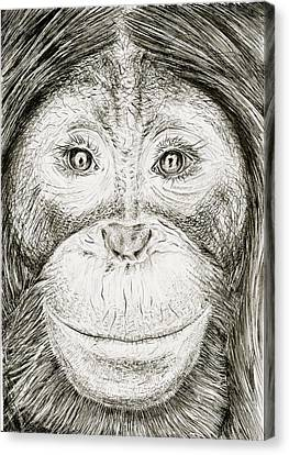 Orangutan Canvas Print by Kate Evans